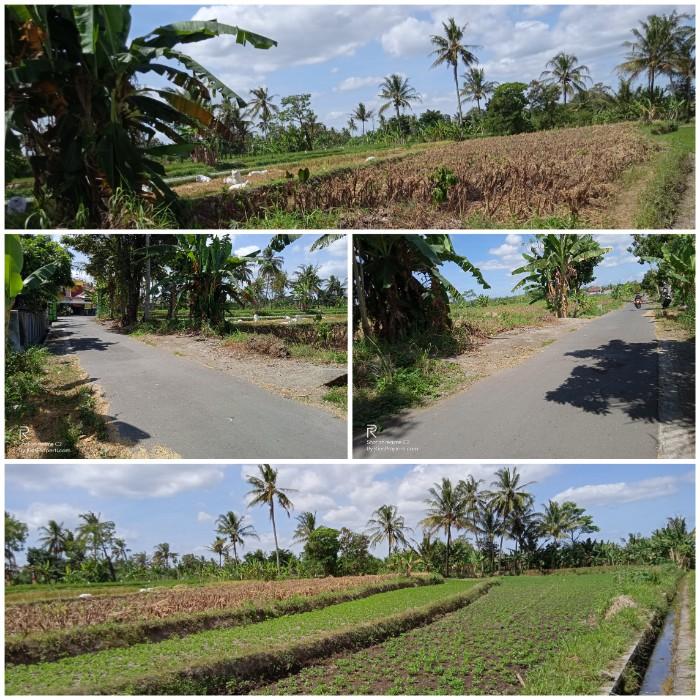 Tanah Sawah Luas 1392 Area Gentan Jalan Kaliurang Km 10 Yogyakarta