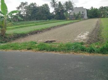 Sawah Luas 700 M2 Di Jakal Km.12 Ngaglik Sleman