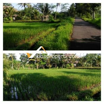 Tanah SHM Sawah Barat Kampus UII Jogja 600 Ribu Per Meter