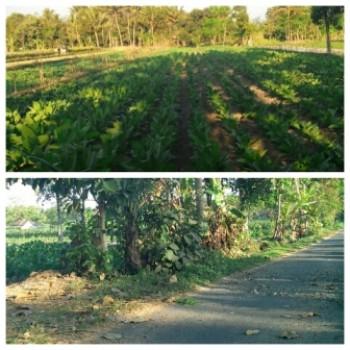 Tanah Luas 1800 M2 Pinggir Jalan Aspal Medari Cilik Sleman